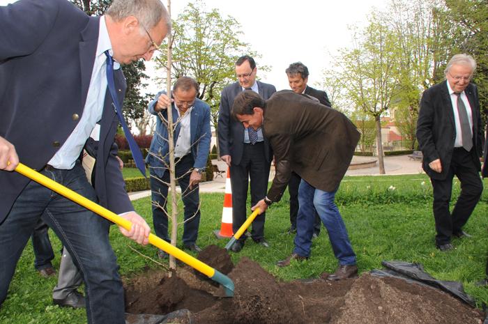 Le rotary club plante un arbre de la paix ville de for Plante un arbre